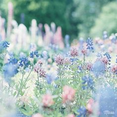 """flowers-roses: """"Field of dreams """" Flowers Nature, Wild Flowers, Beautiful Flowers, Field Of Flowers, Flower Wallpaper, Nature Wallpaper, Flower Aesthetic, Pretty Pictures, Spring"""