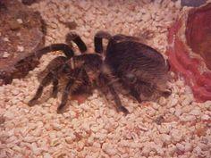 Awsome turantula!  right?