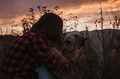 nature portraits countryside outdoors sunset dusk ann labrador retriever field landscapes kiev ukraine kyiv