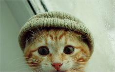 warm hats...on a Handsome Kitty :)