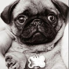 Puppy love Miss Valentine
