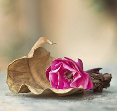 @ Could this be the last rose of summer?