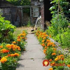 Add vibrant highlight to your cottage garden ideas with these summer flowers. What Is Landscape, Landscape Plans, Landscape Design, Landscaping Jobs, Tall Plants, Garden Cottage, Garden Pictures, Types Of Plants, Native Plants