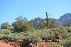 Superstition Mountains by Marcia Anderson on Capture My Arizona // The view from Superstition Mountain Museum.