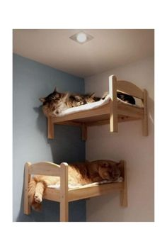 Animal Room, Animal House, Ikea Doll Bed, Doll Beds, Ikea Cat Bed, Cat Bunk Beds, Pet Beds, Beds For Cats, Cat House Diy
