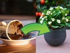 Fusy z kawy jako nawóz Garden Inspiration, Indoor Plants, House Plants, Planter Pots, Gardening, Balcony, Garten, Houseplants, Lawn And Garden