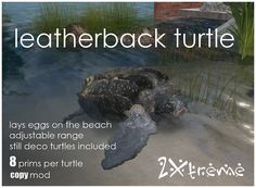 leatherback full set by :: 2Xtreme ::, via Flickr