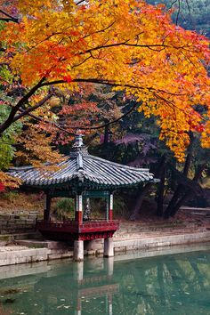 Fall, we love you. Capture the City Photo Competition: the winner Cities In Korea, Autumn Scenes, Photo Competition, Koh Tao, Lonely Planet, Amazing Nature, South Korea, City Photo, Beautiful Places