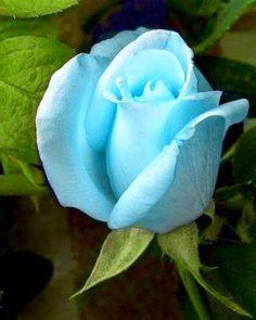 O sol é para as flores, sorrisos são para a humanidade