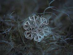 作者說明,這是利用深色羊毛毯子收集雪花,再經7次曝光濾除雜訊後的高品質照片。2013年的攝影作品。 作者:Alexey Kljatov