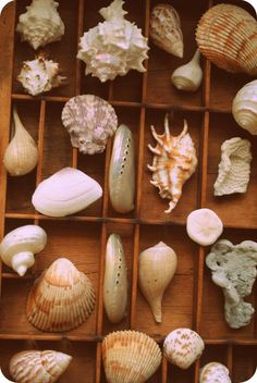 Sea Shells Exotic Variety with coral par Run2theWild sur Etsy, via Etsy.