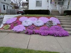 steingarten gartendeko thymian bodendecker lila steine. Black Bedroom Furniture Sets. Home Design Ideas