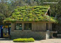 Cobertura vegetal de una casa absorbe agua de lluvia y regula la temperatura interior