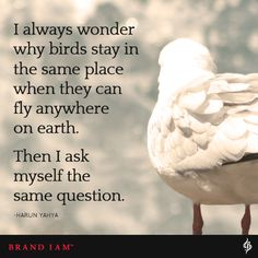 I always wonder why birds stay in the same place when they can fly anywhere on earth. Then I ask myself the same question. Discover more Words of Wisdom on our website.
