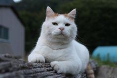 まるたのうえのしろ - かご猫 Blog