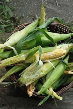 fresh corn by laurastanz on Flickr (via Pinterest)