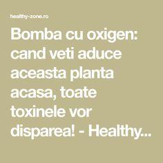 Bomba cu oxigen: cand veti aduce aceasta planta acasa, toate toxinele vor disparea! - Healthy Zone Math Equations, Health, Medicine, Plant, Health Care, Salud