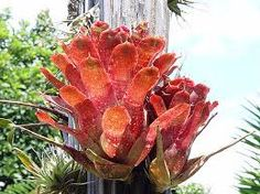 Red flame Tropical Garden Design, Tropical Landscaping, Tropical Plants, Landscape Solutions, Moss Garden, Mini Plants, Small Space Gardening, Pretty Flowers, Beautiful Gardens