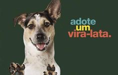 Adote um vira-lata Pet Dogs, Dog Cat, Animals And Pets, Cute Animals, Character Design References, Pet Clothes, Pet Shop, I Love Dogs, Beautiful Creatures