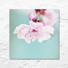 blossom photograph nature fine art by geishaphotography on Etsy, $50.00