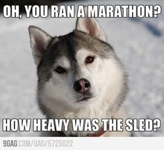 Funny Picture Gallery » The Funniest Pictures Website! » Funny husky