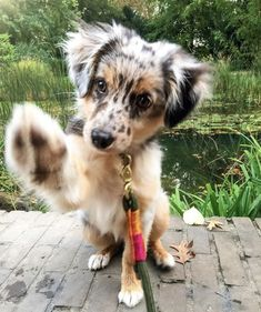 Dog And Puppies Memes .Dog And Puppies Memes Super Cute Puppies, Cute Baby Dogs, Cute Little Puppies, Super Cute Animals, Cute Dogs And Puppies, Cute Little Animals, Cute Funny Animals, Doggies, Funny Puppies