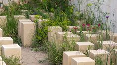 Limestone building blocks arranged informally and interspersed with annuals, perennials and sub shrubs many of which were grown from seed collected in Malta
