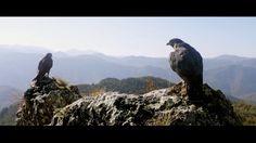 """Valcer za mladu - Stribor Kusturica (Muzika iz filma """"Na mlečnom putu"""")"""