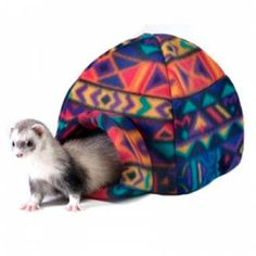 https://www.tiendanimal.fr/grotte-igloo-marshall-pour-furets-petits-animaux-p-9045.html