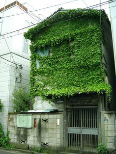 now that's a green wall vertical garden