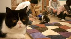 Calico cat cafe, Tokyo... where you pay to go play with cats and drink tea/coffee.
