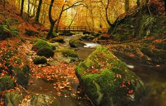 Amber leaves are scattered over the emerald moss of Stock Ghyll, a tributary of the River Rothay in the English Lake District.