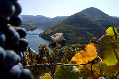 Rio Douro - Vinho do Porto
