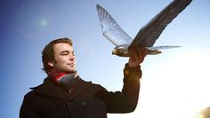 Robotvalk gaat lastige vogels verjagen bij vliegvelden en akkers - Binnenland - VK