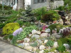 Hillside Rock Garden example. Use Fieldstone (brown) bolders.
