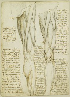 Leonardo da Vinci, 1452-1519, Italian, The muscles of the leg, c.1508. Pen and ink over black chalk on paper.  Royal Collection Trust, Windsor.