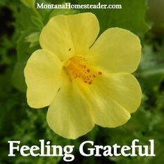 Feeling Grateful and Thank You - Montana Homesteader