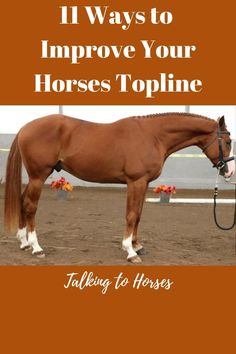 This article provides you with information about: What is a poor topline on a horse? What is a good topline on a horse? Why does my horse need a strong topline? How can I develop my horses topline? Horse Riding Tips, My Horse, Horse Love, Riding Gear, Trail Riding, Horses And Dogs, Show Horses, Race Horses, Horse Training