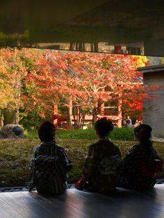 https://flic.kr/p/8YrCch | autumn@Byodoin Hoshokan, Uji, Japan | @平等院鳳翔館