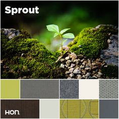 Lush and spring-like with cool, earthy touches, this is a palette to inspire fresh thinking. Office design inspiration from The HON Company.