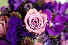 I love sterling roses!