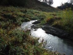 Iowa Trout Stream
