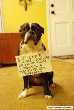 """I am against dog shaming- dogs think like dogs, not like people.  Train them yes but putting signs on them to """"shame"""" them is crazy."""