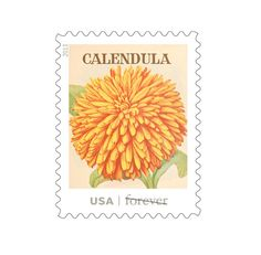 US postage stamp based on vintage seed packet