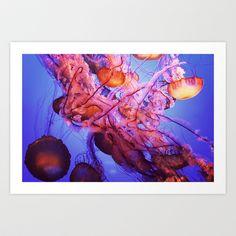 Jellyfish by Randy Aquilizan