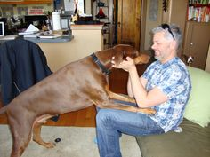 How could a dog's death hurt as much as that of a relative? The author assesses that feeling.