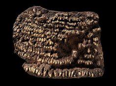 Bolsa mais antiga do mundo era cravejada com dentes de cachorro - Zoinc