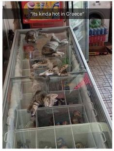 17+ Funny Lazy Cats that can sleep anytime anywhere... Click for MORE!