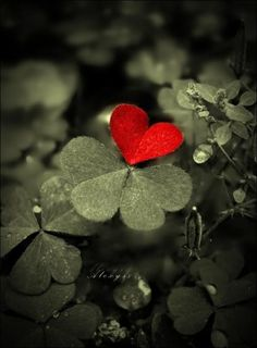Four Leaf Clover Heart