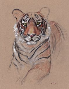Exciting Learn To Draw Animals Ideas. Exquisite Learn To Draw Animals Ideas. Tiger Sketch, Tiger Drawing, Tiger Painting, Tiger Art, Painting & Drawing, Card Drawing, Animal Sketches, Animal Drawings, Art Sketches